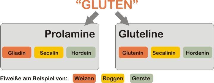 Gluten und seine Einteilung / Bild: Michael Zechmann